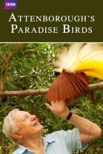Film David Attenborough: Rajští ptáci (Attenborough's Paradise Birds) 2015 online ke shlédnutí