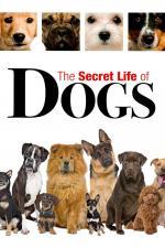 Film Tajný život psů (Secret Life of Dogs) 2013 online ke shlédnutí