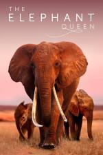 Film Sloní královna (The Elephant Queen) 2018 online ke shlédnutí