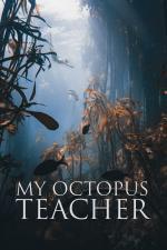 Film Moje učitelka chobotnice (My Octopus Teacher) 2020 online ke shlédnutí
