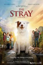 Film The Stray (The Stray) 2017 online ke shlédnutí